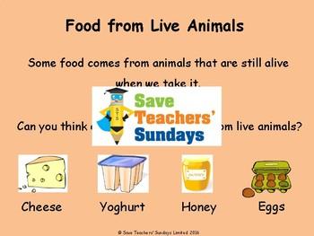 Vegans, Vegetarians and Herbivores Lesson plan and Workshe