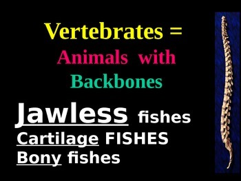 Vertebrate power point