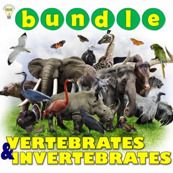 PDF Vertebrates and Invertebrates Animal Characteristics C