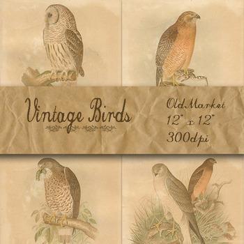 Vintage Birds Digital Paper Pack - Scientific Plates - 12