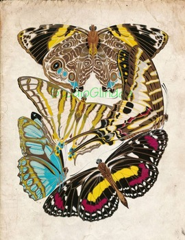 Vintage Butterfly Print: High Resolution Download, 5 Scien
