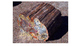 Visual Thinking Activity - Fossils PPT