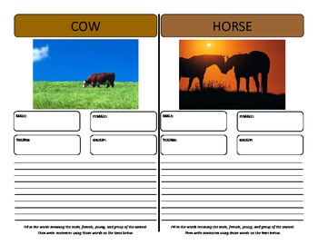 Vocabulary Graphic Organizers - for animals males, females