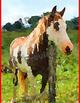 WATERCOLOR Farm Landscapes clip art - horse, barn, cows