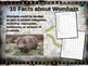 WOMBATS - visually engaging PPT w facts, video links, hand