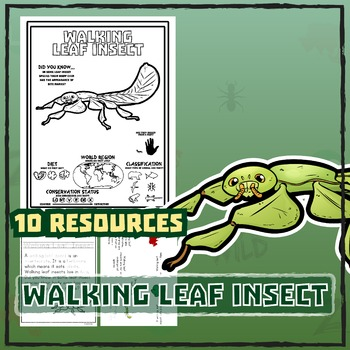 Walking Leaf Insect -- 10 Resources -- Coloring Pages, Rea