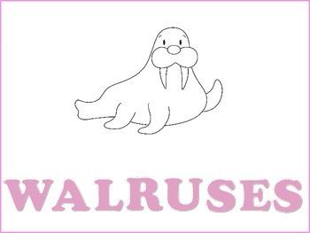 Walrus Graphic Organizers  -Freebie