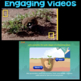 Watch Life of a Dung Beetle & Stages of Plant Life Cycle -