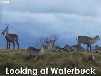Waterbuck Antelope - Interactive PowerPoint presentation