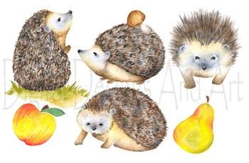 Watercolor hedgehog clipart, porcupine clipart, Forest ani