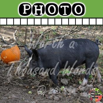 Photo: Pig