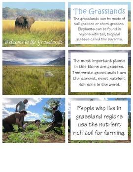Welcome to the Grasslands - Habitat Studies