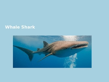 Whale Shark - Power Point - Information Facts Pictures Rev