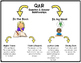 Whales by Gail Gibbons QAR Comprehension Questions with QA