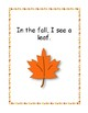 What Do I See in the Fall?