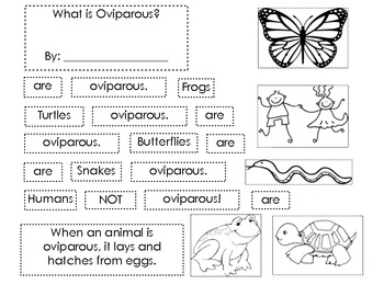 What Is Oviparous? Sentence Scramble Flip Book