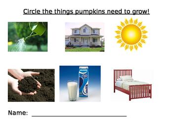 What Pumpkins need to grow worksheet