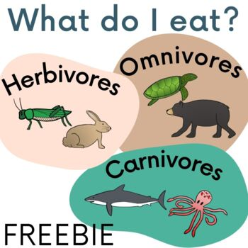What do I eat? Herbivore, Omnivore, Carnivore Sort