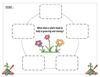 What does a plant need to grow