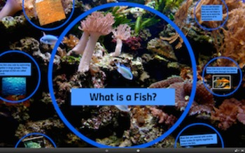 What is a Fish? PREZI