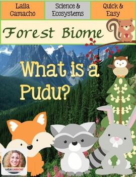 Forest Animals Pudu