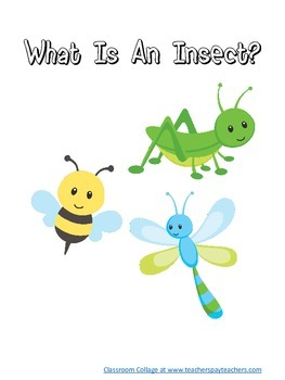 What is an Insect?  Booklet
