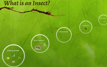 What is an Insect? PREZI