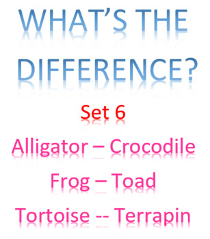What's the Difference? -- Set 6