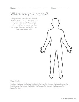 """""""Where are your Organs?"""" Worksheet - Anatomy"""