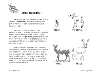 White-Tailed Deer Interactive Notebook