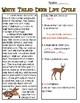 White-Tailed Deer Life Cycle Reading Passage