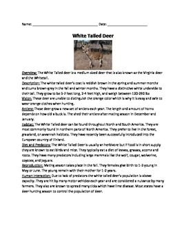 White Tailed Deer - Review Article Facts Information Vocab