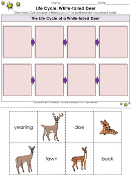 White-tailed Deer Life Cycle Sort Cut and Paste Activity #