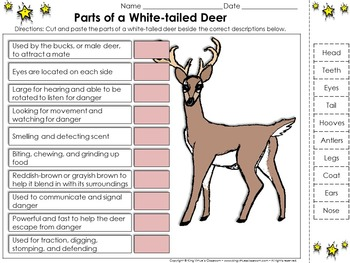 White-tailed Deer: Parts of a White-tailed Deer Cut and Pa