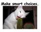 Whole Brain Teaching Rules Cats Theme