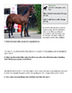 Whole Numbers & the Keeneland Yearling Sale