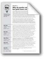 Why Do Pandas Eat Plants But Polar Bears Eat Meat?