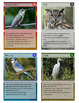 Wild Bird Trading Cards, Bingo/Slideshow and Puzzle Combo
