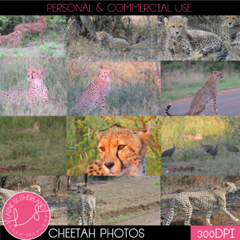 Wild Life Photos of Cheetah for Commercial Use