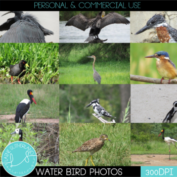 Wild Life Photos of Water Birds for Commercial Use
