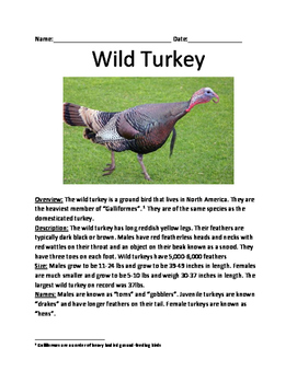 Wild Turkey - informational article lesson facts questions