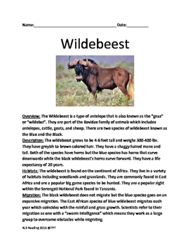 Wildebeest - informational article lesson facts questions