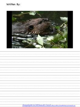 Wildlife Picture Stories- Animals