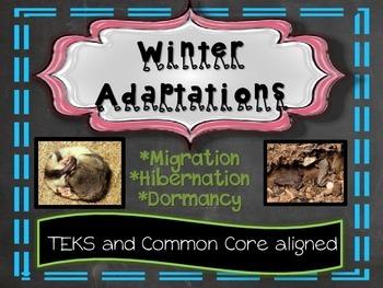 Winter Adaptations