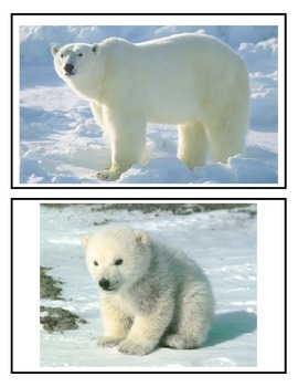Winter Animals Mommy and Baby Match Up Cards