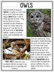 Woodland Animal Non-fiction Close Reading Passages (FREEBIE)