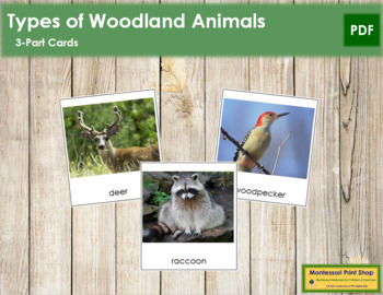Woodland Animals: 3-Part Cards
