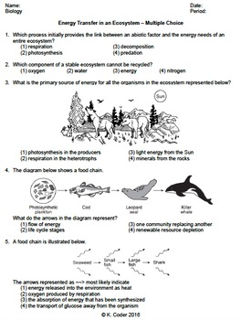Worksheet - Energy Transfer in an Ecosystem MC *EDITABLE*