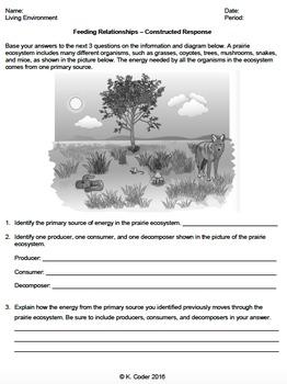 Worksheet - Feeding Relationships (Constructed Response) *