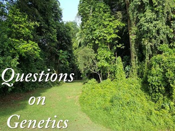 Worksheet on Genetics